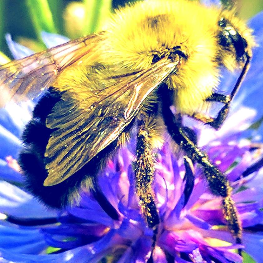 Befriending Bumble Bees