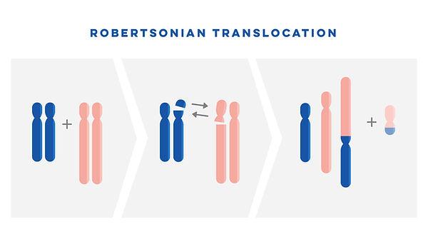Robertsonian Translocation.jpg