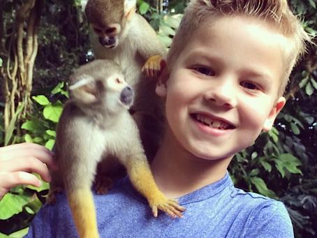 School Field Trip Ideas: 6 Reasons to Choose Monkey Jungle