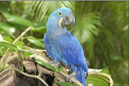 Monkey Jungle | Wings of Love Foundation | Non-profit Organization | Sanctuary for captive parrots that are displaced or can no longer be cared for by their owners