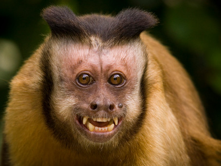 Our Miami Animal Park Is Home to This Awesome Monkey Species