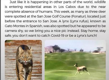 Wildlife Los Cabos Mex.