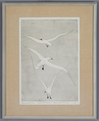 Albatross Etching, Signed & Numbered ,by Annika Presson
