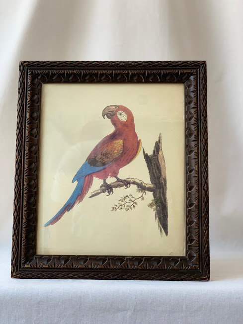 Framed Picture of Parrot