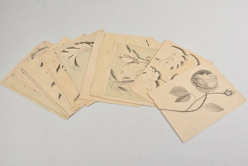 Set of Pen Drawings, Plants