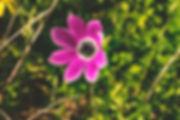 Nature05.jpg