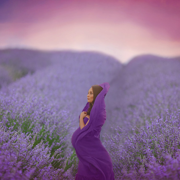 maternity picture in lavendar field