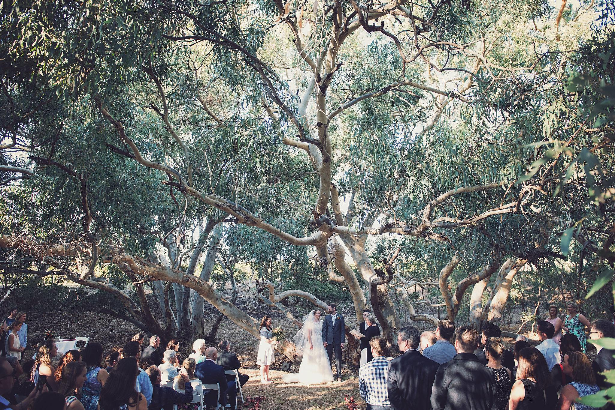 Werner Vineyard Wedding