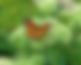 milkweed.png