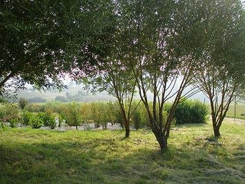 Native plant nursery provides plants for riparian restoration.