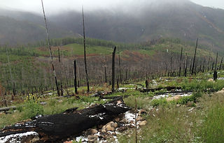 Livestock grazing allotment on the Colville National forest, damaged by 2015 Stickpin Fire.