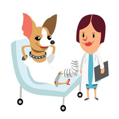 Gastos veterinarios por accidente