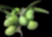スペインオリーブジュースオリーブの実.png