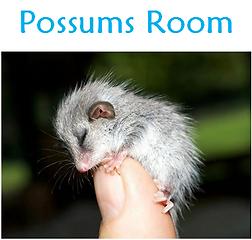 poss room.PNG