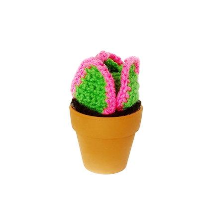 Pink Petal Succulent