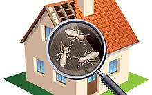 termite inspection.jpg