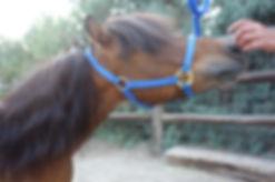 Mini Joys Founding Horse Levi