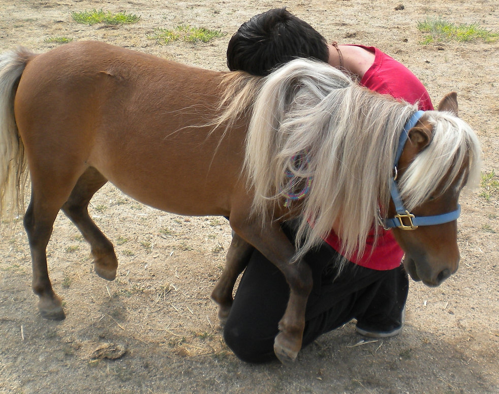 Mini Joys equine programs