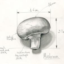 Sara Netherway Mushroom.jpg