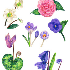 Sara Netherway winter blooms.jpg