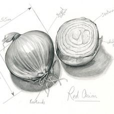 Sara Netherway onion.jpg