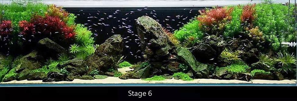 Stage 6.jpg
