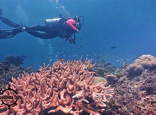 필리핀 스쿠버 다이빙 가격