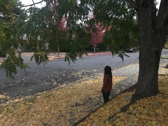 The Autumn Rain, My Vindication