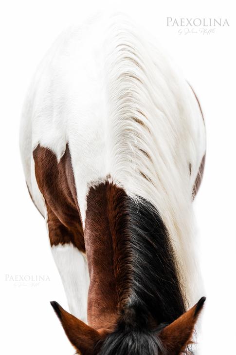 Horse_Pferd_White_1000x1500_simple_brown