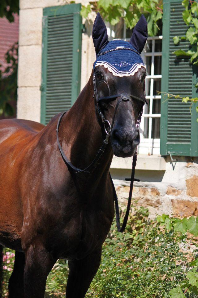 Pferd vor Gebäude mit Zaumzeug