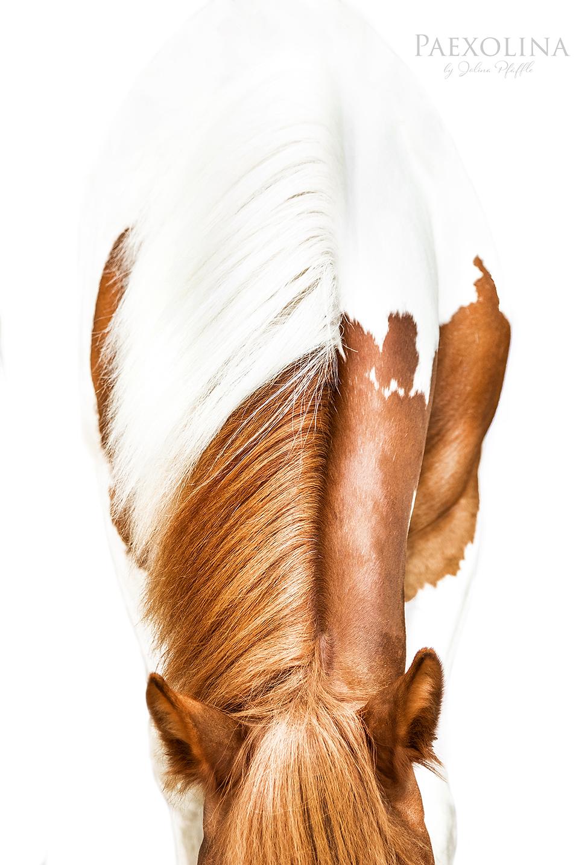Horse_Pferd_White_Tinker_1000x1500.png