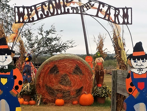 We Grow More Than Just Pumpkins:Experience The Joys Of Harvest & Fall This Month At Country Critters