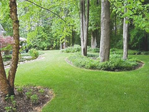 landscaping%20_%20a%20curious%20gardener%20(1)_edited.png