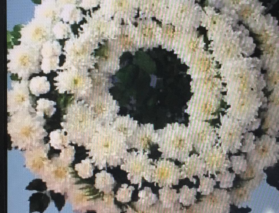 Corona Crisantemo
