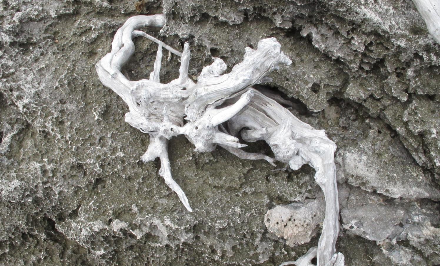 Cinders and Bones