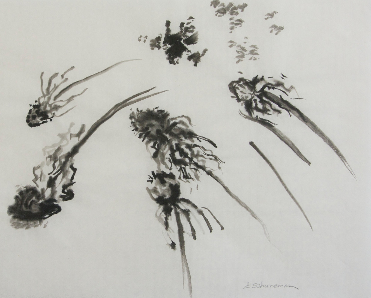 Coneflower Seed Heads