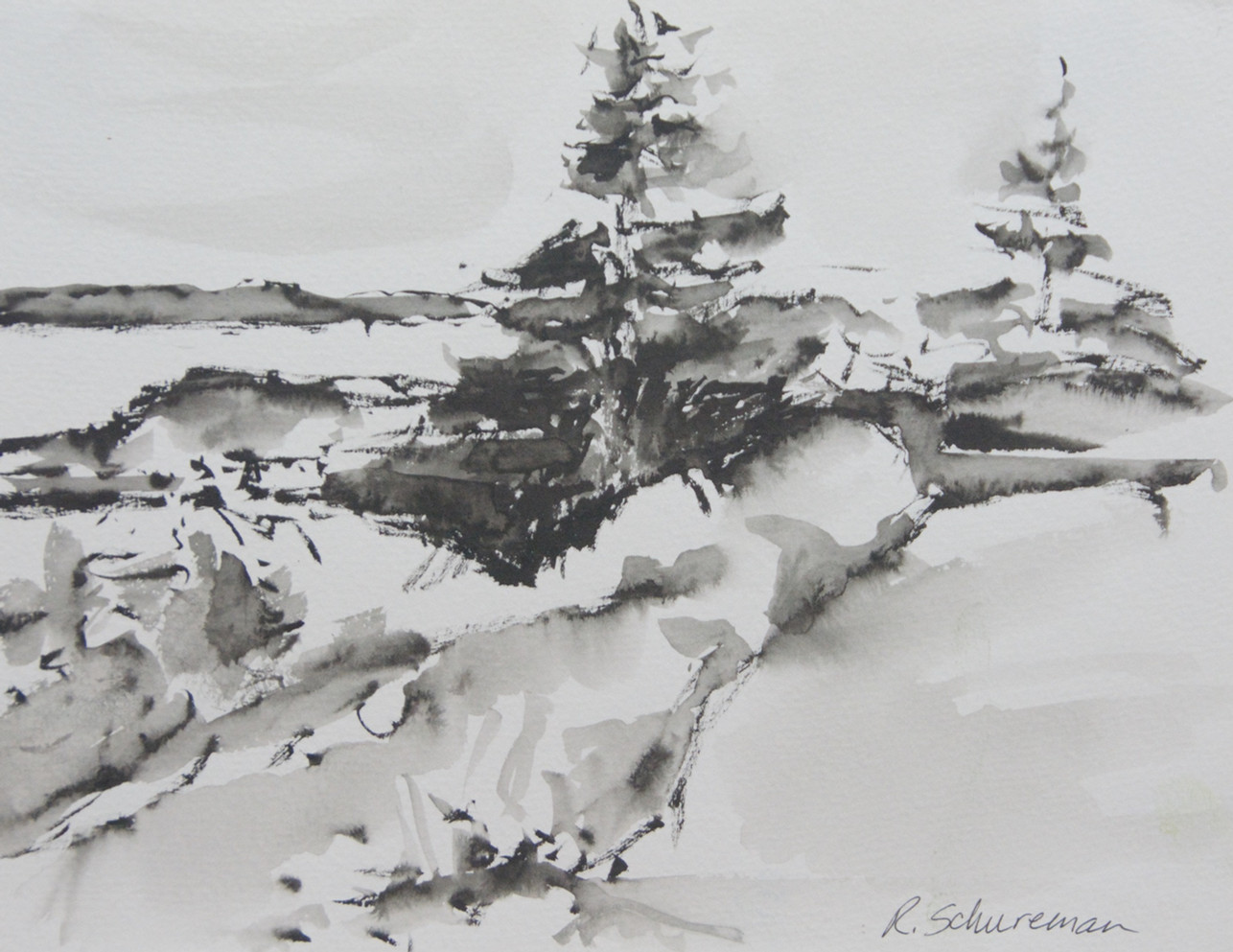 Monhegan Trees Hugging Rocks