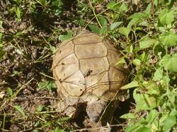 tortuga en reserva