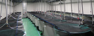 shrimp hatchery