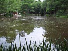 Tratamiento de aguas con productos Clarity de Indurres en laguna ornamental en Atlanta, Georgia