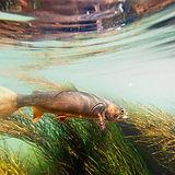 tratamiento de algas para acuicolas