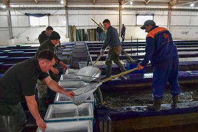 tratamiento de riles para centros de cultivo acuicultura