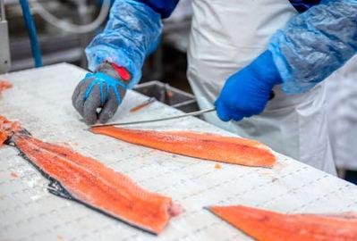 tratamiento de riles para plantas procesadoras de salmones