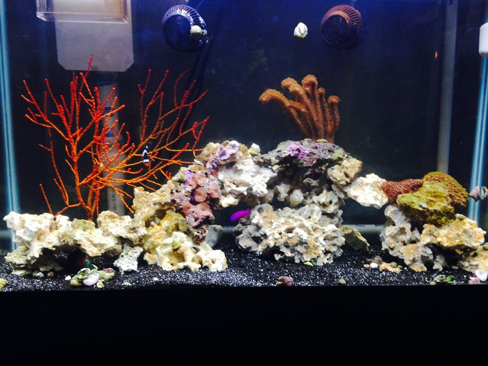 Our Saltwater Aquarium