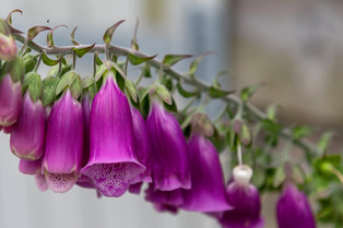 Flowers at Cefn Ceiriog