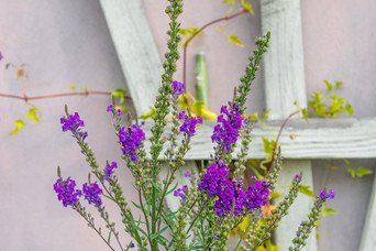 Cefn Ceiriog flowers