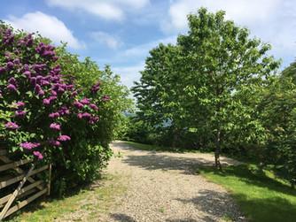 Cefn Bach driveway