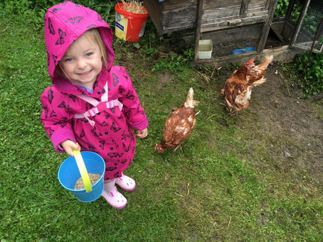 Extra hands with the hens and the goats!