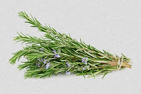 blog-image-rosemary-dollar-paid_edited_e