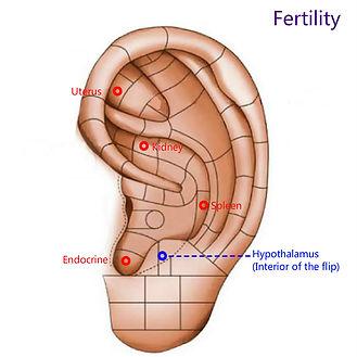 Fertility.jpg
